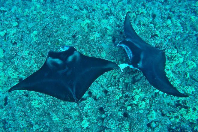 Kiwailuka Big Island Hawaii, Kailua-Kona, United States
