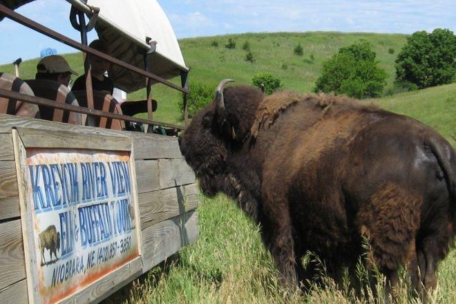 Kreycik Elk & Buffalo Tours, Niobrara, United States