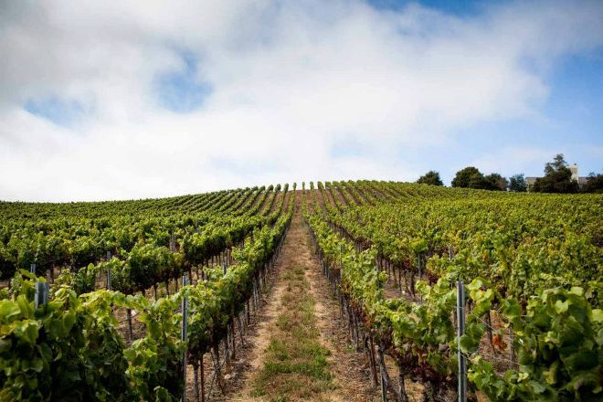 Laetitia Vineyard and Winery, Arroyo Grande, United States