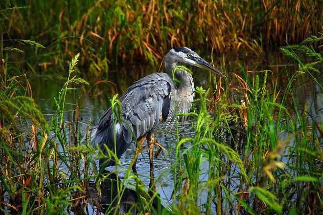 Lake Woodruff National Wildlife Refuge, De Leon Springs, United States