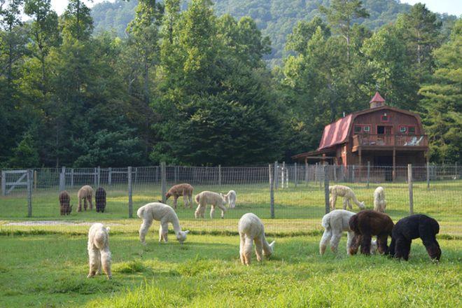 Lasso the Moon Alpaca Farm, Blairsville, United States