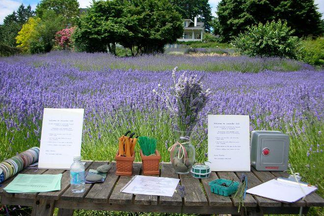 Lavender Hill Farm, Vashon, United States