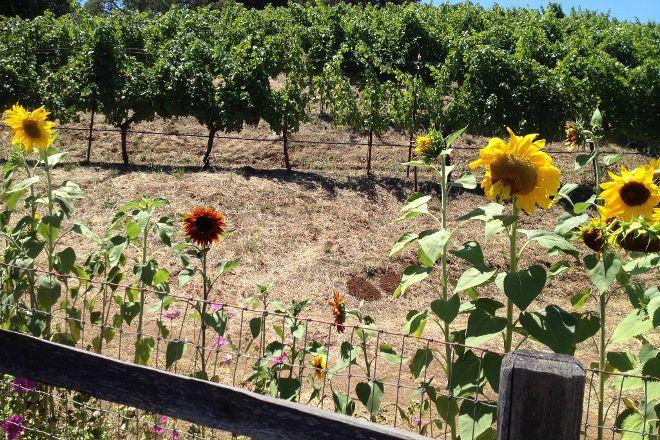 Leone Wine Tours, Santa Rosa, United States