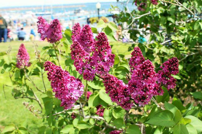 Lilac Tree Spa, Mackinac Island, United States