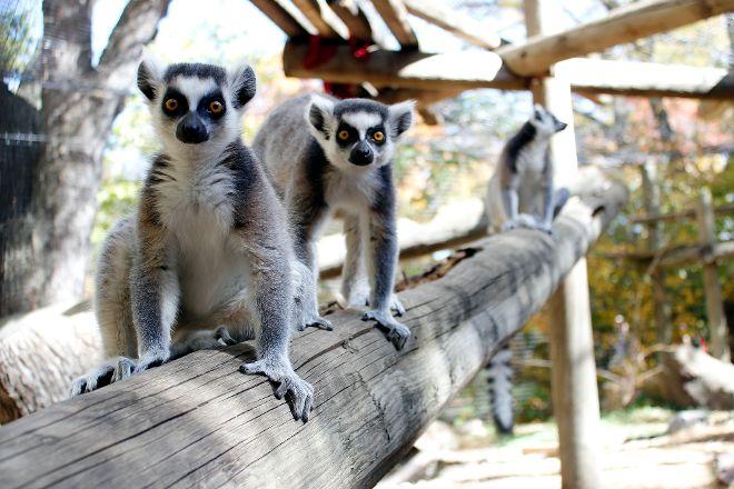 Lincoln Children's Zoo, Lincoln, United States