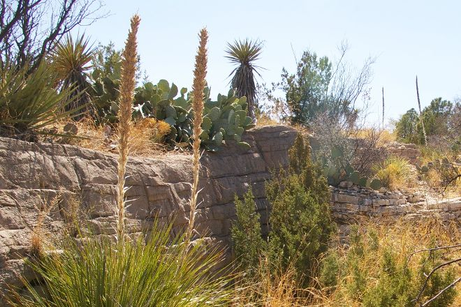 Living Desert Zoo and Gardens State Park, Carlsbad, United States