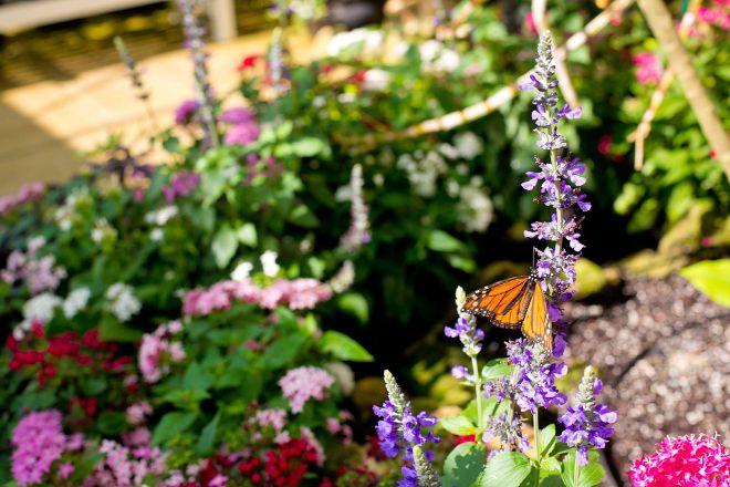 Lukas Nursery & Butterfly Encounter, Oviedo, United States