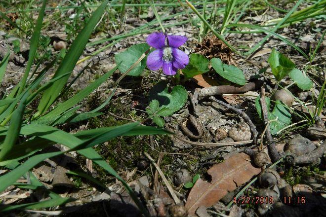 Lums Pond State Park, Bear, United States