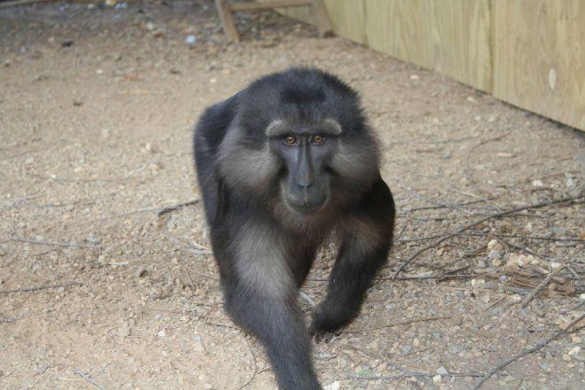 Luray Zoo - A Rescue Zoo, Luray, United States