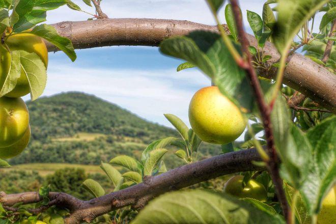 Maylath Farm and Orchard, Sugarloaf Township, United States