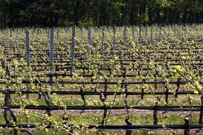 McCall Wines, Cutchogue, United States