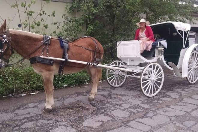Mid-City Carriage Tours, New Orleans, United States