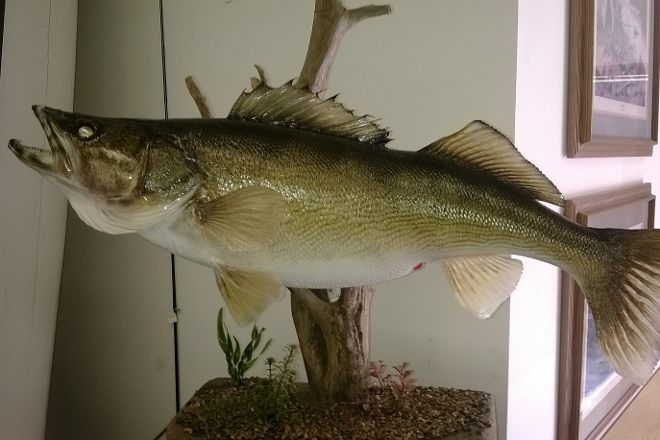 Minnesota Fishing Museum, Little Falls, United States