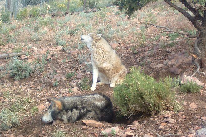 Mission: Wolf, Gardner, United States