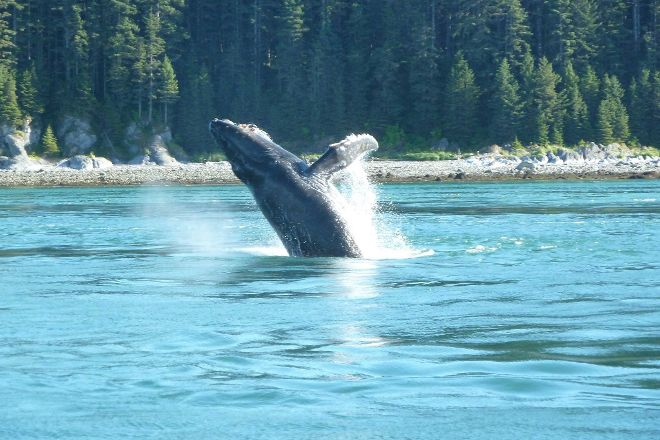 Misty Bay Lodge Whalewatching, Hoonah, United States