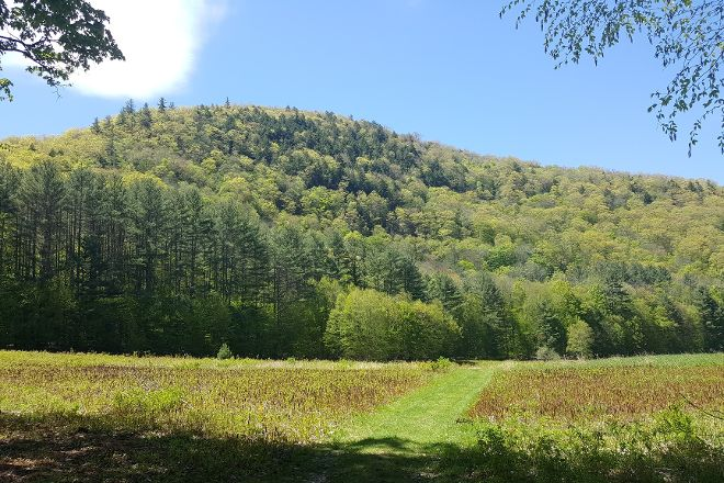 Mohawk Trail State Forest, Charlemont, United States