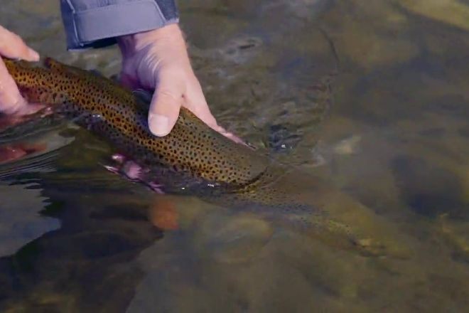 Montana Fly Fishing Guides - Day Tours, Livingston, United States