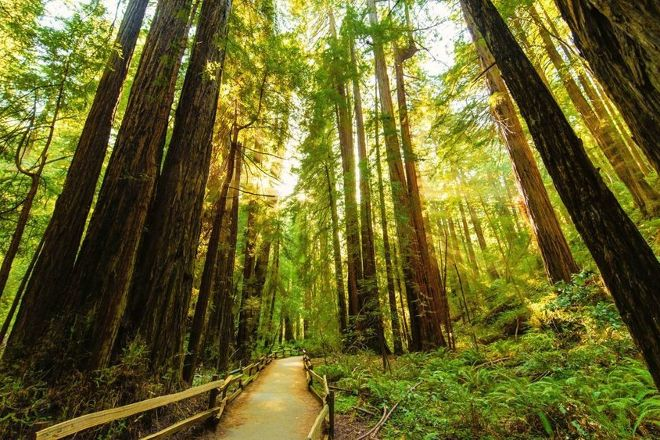 Muir Woods Shuttles and Tours, San Francisco, United States