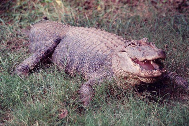 Natchitoches Alligator Park, Natchitoches, United States