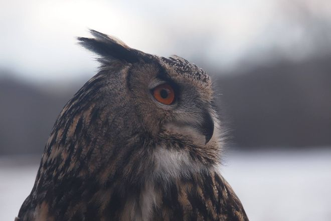 New England Falconry, Hadley, United States