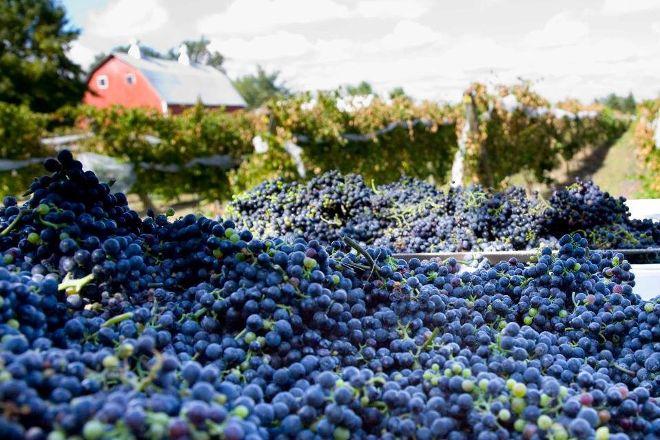 Next Chapter Winery, New Prague, United States