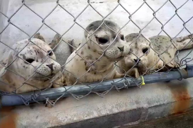 Northcoast Marine Mammal Center, Crescent City, United States