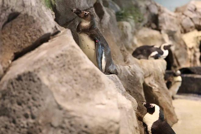 OdySea Aquarium, Scottsdale, United States