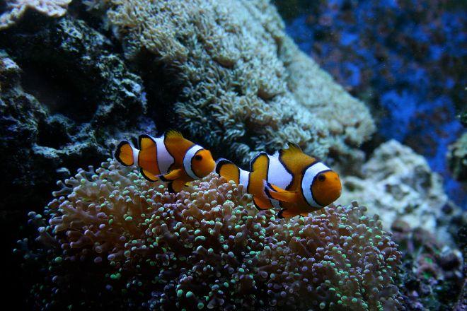 Oklahoma Aquarium, Jenks, United States