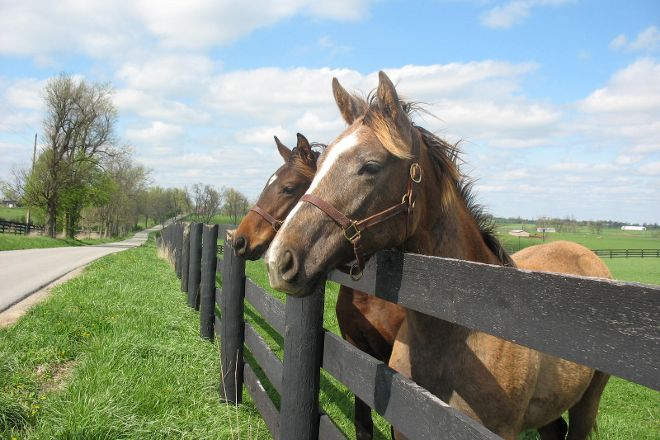 Old Friends at Dream Chase Farm, Georgetown, United States