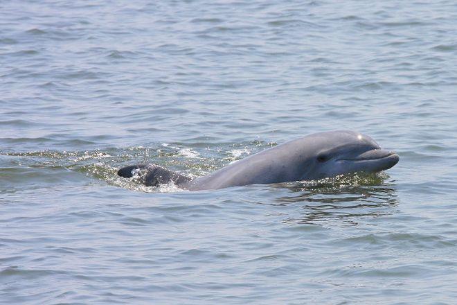 Paradise Dolphin Cruises, Wanchese, United States