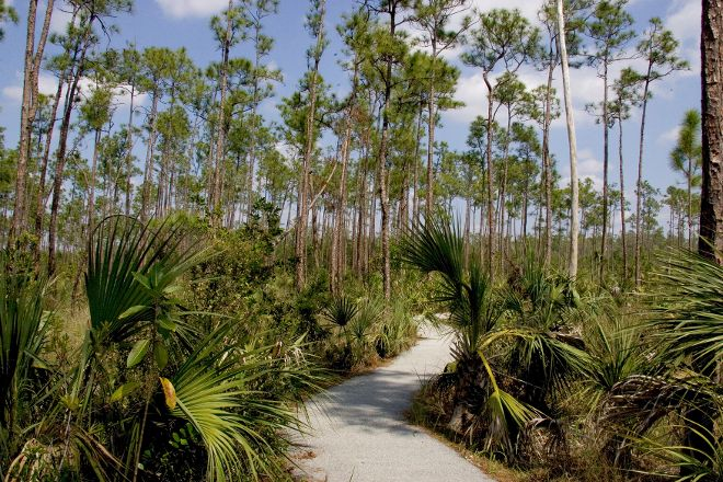 Pineland Trail, Everglades National Park, United States