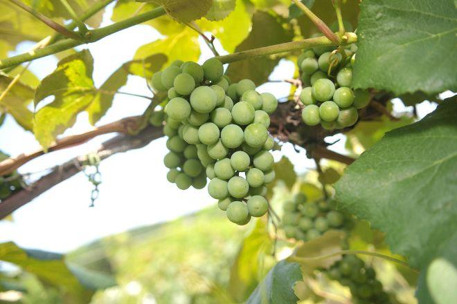 Pinnacle Ridge Winery, Kutztown, United States