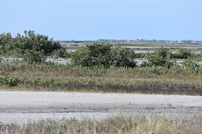 Port Aransas Nature Preserve at Charlie's Pasture, Port Aransas, United States