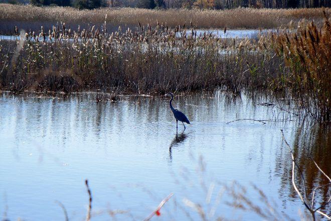 Prime Hook National Wildlife Refuge, Milton, United States