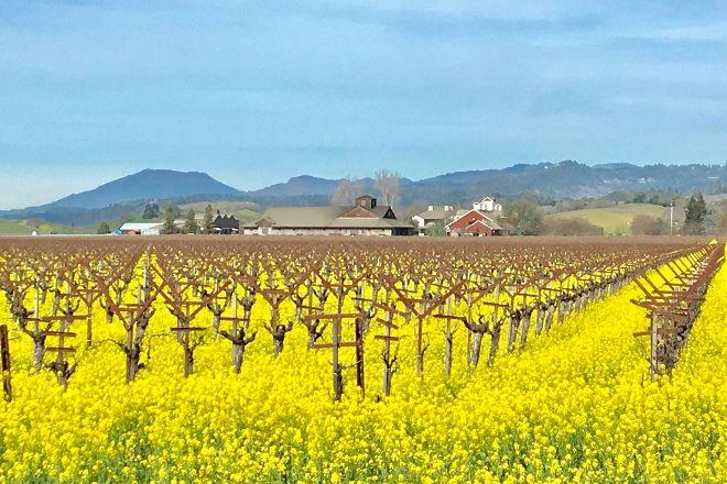Private Wine Drivers, Sonoma, United States