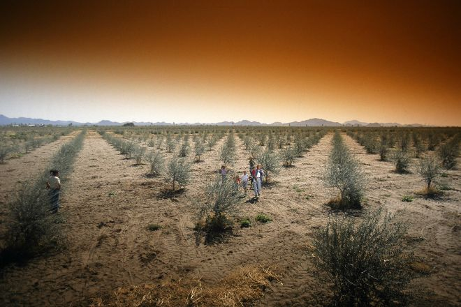 Queen Creek Olive Mill, Queen Creek, United States