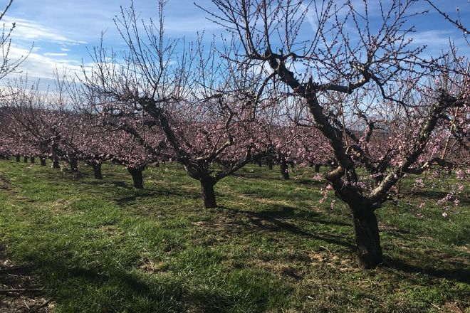 Rendleman Orchards, Alto Pass, United States