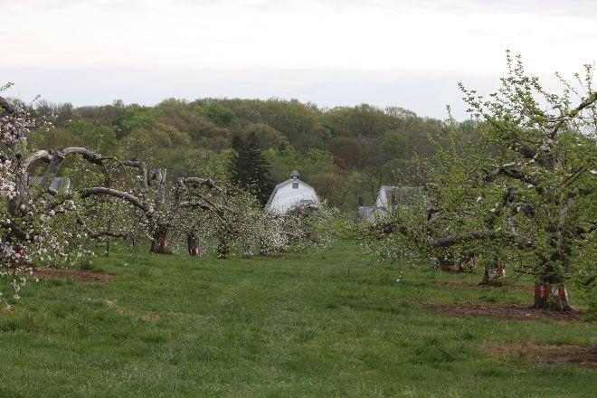 Riamede Farm, Chester, United States