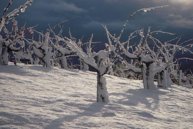 Ridge Vineyards, Cupertino, United States