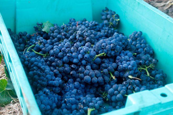 Riverbench Vineyard & Winery, Santa Barbara, United States