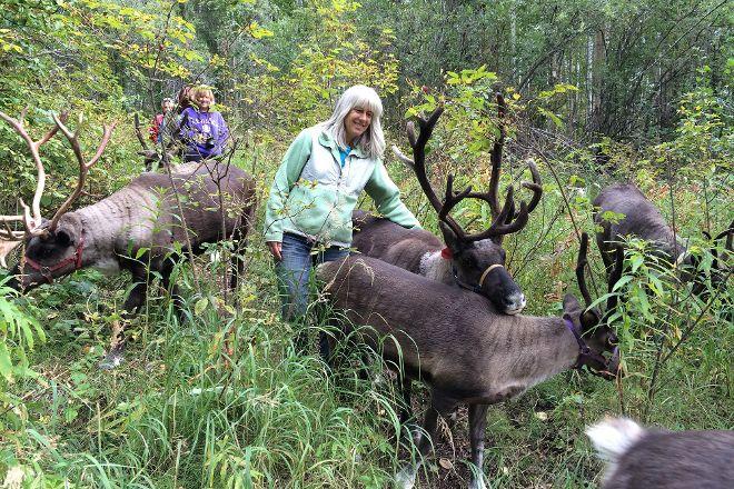 Running Reindeer Ranch, Fairbanks, United States