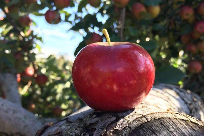 Samascott Orchards, Kinderhook, United States