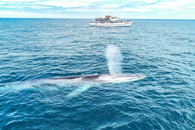 San Diego Whale Watch, San Diego, United States
