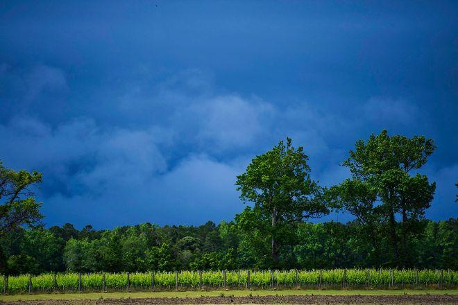 Sanctuary Vineyards, Jarvisburg, United States