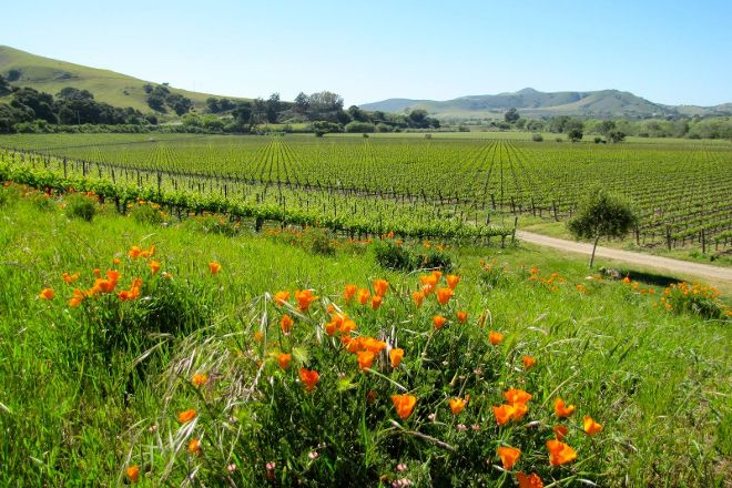 Santa Barbara Classic Wine Tours, Santa Barbara, United States