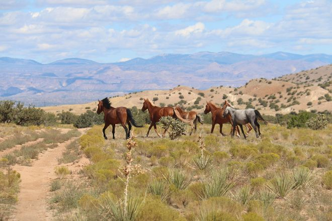 Santa Fe Mountain Adventures, Santa Fe, United States