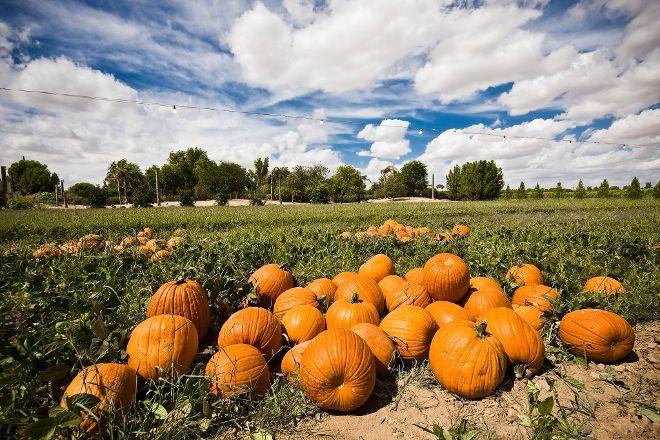 Schnepf Farms, Queen Creek, United States