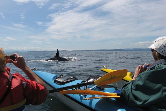 Sea Quest Expeditions, Friday Harbor, United States