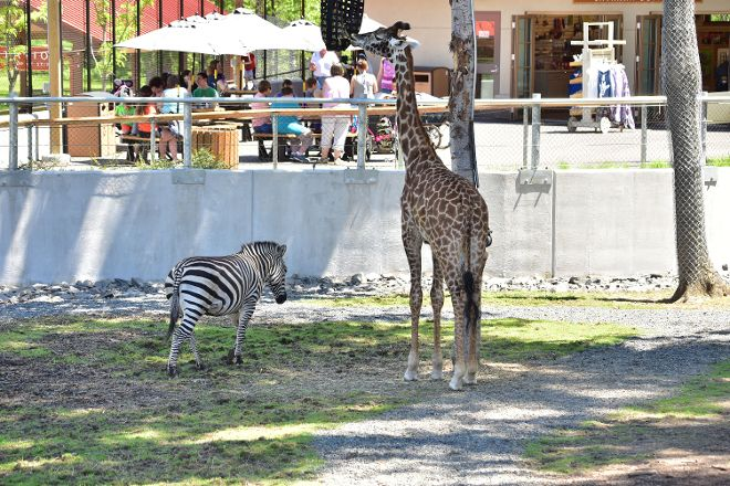 Seneca Park Zoo, Rochester, United States