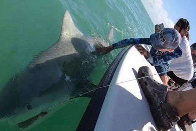 Shark Chaser Charters, Goodland, United States